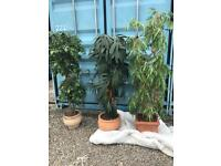 3 x quality artificial plants £60 each