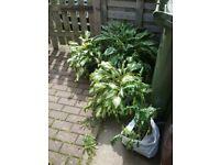 Garden plants x4