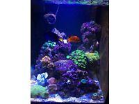 Marine aquarium full set up