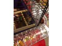 Syrian Hamster for Sale with cage