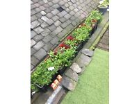7 grey and red plastic planters (with green manured soil) for sale