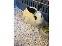 Boy rabbit