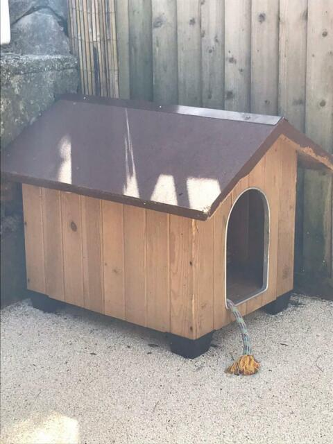 Dog Kennel In Cowbridge Vale Of Glamorgan Gumtree