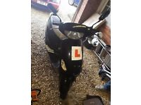 Pulse Scout 49cc Moped