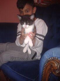 Hi i have 2 little kittens for sale ..