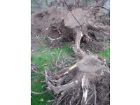 Tree Roots For Wood Burning Stoves