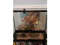 milk snake and vivarium