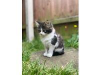 Fluffy little kitten (boy)