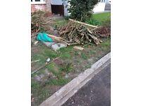 FREE FIRE WOOD (Garden clearance)