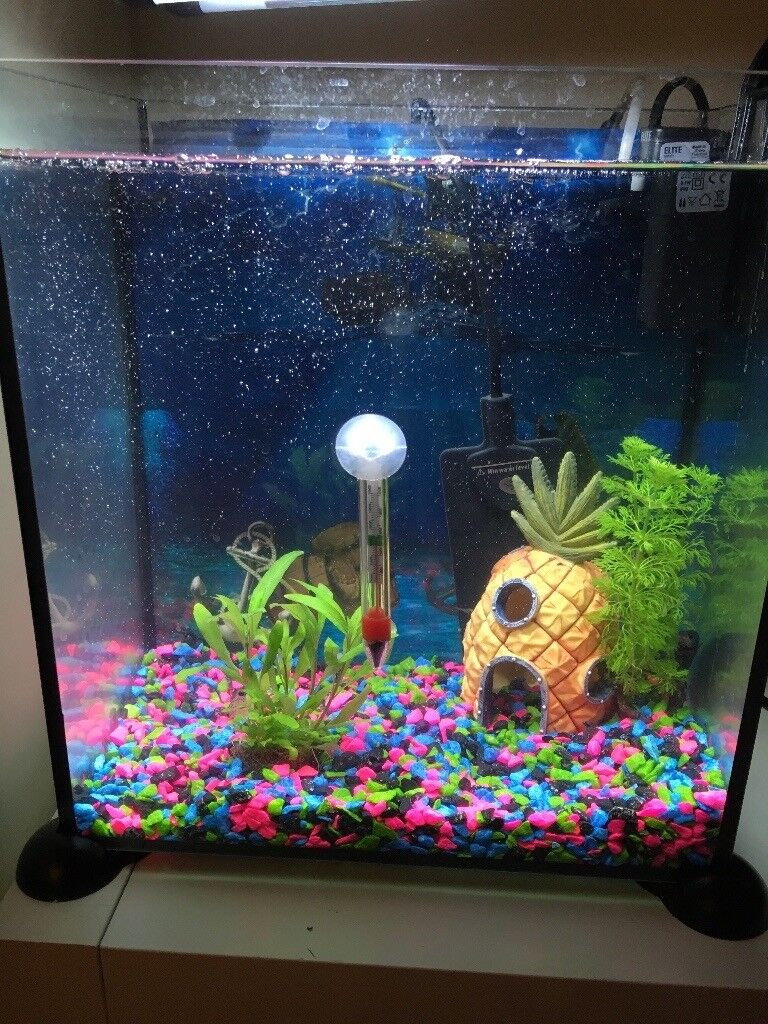 Aquarium warm water fish tank 17l in northfield west for Warm water fish