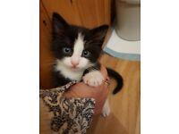 Kittens for sale, 8wks old, £100 each
