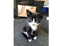 Male Kittens for sale £35