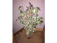 Indoor fake tree