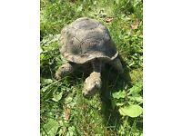 Garden ornament realistic tortoise