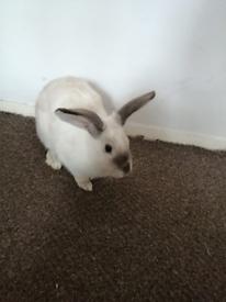 A female rabbit