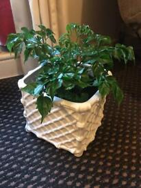 White square Ceramic pot. 7 1/2 inches square +dark green plant