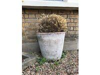 Large Clay Garden Pots