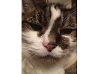 CAT HOME BOARDING IN GATESHEAD, TYNE AND WEAR-24HRS-CONSTANT COMPANY