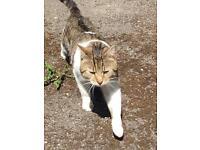 Cat found Riddlesden Keighley
