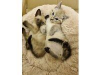 I have 2 gorgeous kitten BLUE eyes 😸