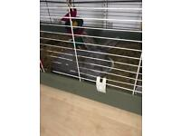 2 x 6 month old male rabbits
