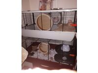 Syrian hamster + Cage And Russian hamster + Cage