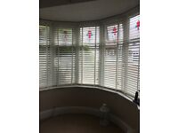 50mm lat blinds