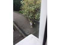 Found A Manx Cat