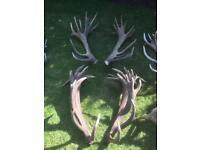 Huge deer antler sets