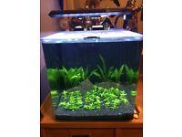 Aqua one, Auqa Aspire 22 aquarium 22 litre