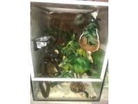 Gecko setup