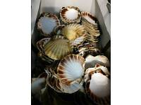 Shells 140pcs