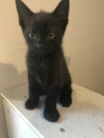 One 8 week old kitten left