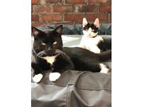 Cats need new home help please