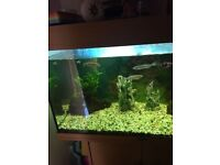 Large fish tank with fish included