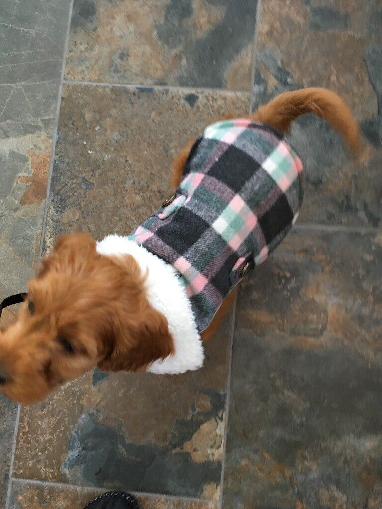 Pets At Home Puppy Small Dog Winter Coat In Arnold