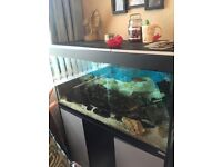 3ft fish tank, stand, accessories and cichlids