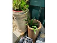 Chimney pots, planters, architectural salvage