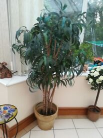large imitation tree suit conservatory