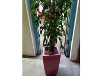 Large Office artificial plant