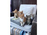 6 beautiful and playful kittens