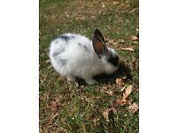 Babay Rabbits
