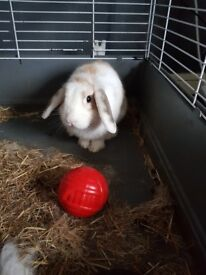 his a cute little boy bunny comes with cage, one toy, food, sawdust and hay also cage disinfectant.
