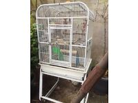 Parrott cage to collect