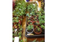 Plant sale and stalls, Lower Wortley Methodist Church, 27 May 2017, 10.30am all welcome