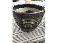 10 mixed garden pots & teddy