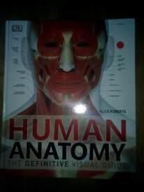 Human anatomy visual guide illustration
