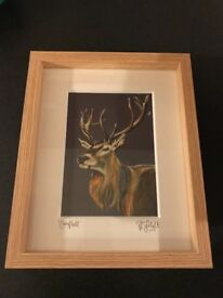 """""""Campbell"""" Framed Stag Print"""