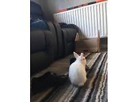 In door rabbit and cage