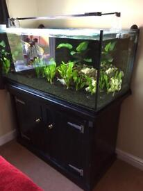 400 litre (49x24x21 inch) aquarium and stand